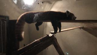 【鹿児島】夜の平川動物公園でライトに照らされて光る動物たちを見てきた【NIGHT ZOO】
